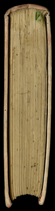 """Head of the [1882] Ward, Lock & Co. """"Lily Series, Complete Edition"""" Reprint"""