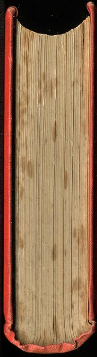 "Head of the 1879 James Nisbet & Co. ""Golden Ladder Series"" Reprint"