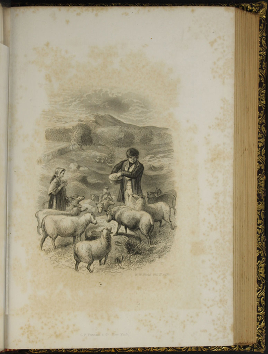 "Illustration on Page 154d of Volume 2 of the 1853 G.P. Putnam & Co. ""Illustrated Edition"" Reprint Depicting Mr. Van Brunt Tending His Flock"